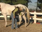 How To Pick a Horse's Hoof Video