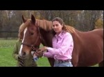 How to Safely Paste Deworm Your Horse