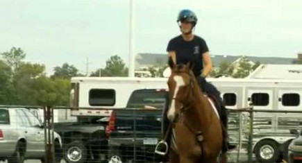 The Police Horse Competition – An Annual Event For Brave Horses
