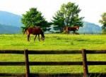 Horse Pasture Grass