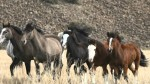 Strong Women, Wild Horses