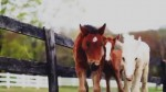 Home We'll Go – Video For All Horse Lovers!