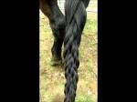 Hair Styles For Horses