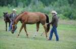 Jonathan-Field-horse-relaxed-feature